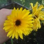 LLF - en framtida blomma i Länghem