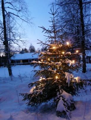 En fin julgran i Bragnum!